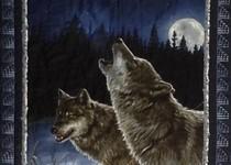 'Wild Nights'